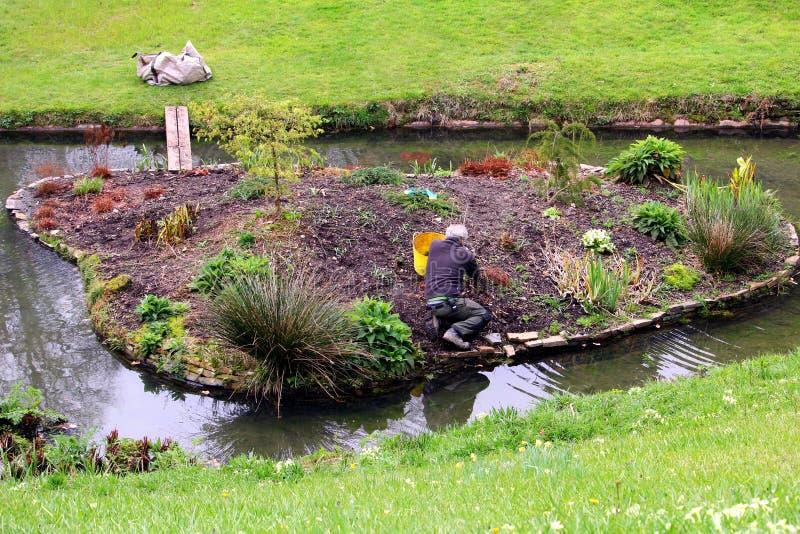 Falmouth Cornwall, UK - April 12 2018: Mogen man med grått hår som rensar, medan arbeta i trädgården i en rabatt nära en liten st arkivbilder