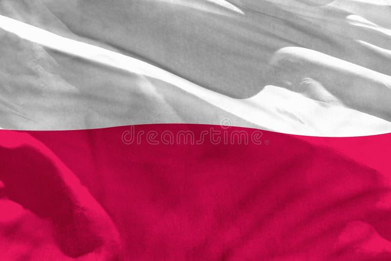 Falowania Polska flaga dla używać jako tekstura lub tło flaga jest trzepotliwa na wiatrze ilustracja wektor