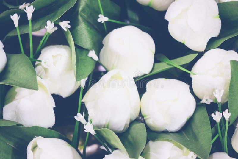 Falsificación del tulipán imágenes de archivo libres de regalías