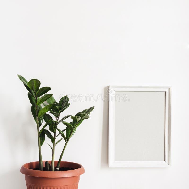 Falsk övre fotoram på den vita väggen och den inlagda växten Zamioculcas royaltyfria bilder