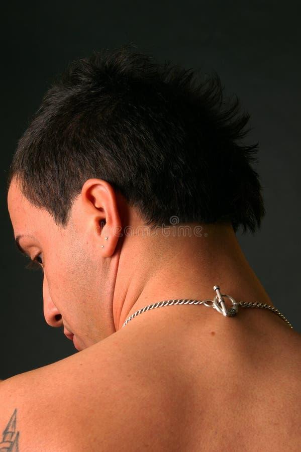 Falso-falcão imagens de stock