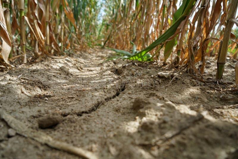 Falta da ligação da precipitação e das alterações climáticas a seco e seca em altas temperaturas fotografia de stock royalty free