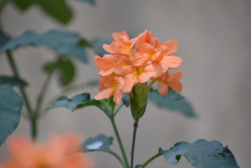 Falta de definición compensada de la flor imagenes de archivo