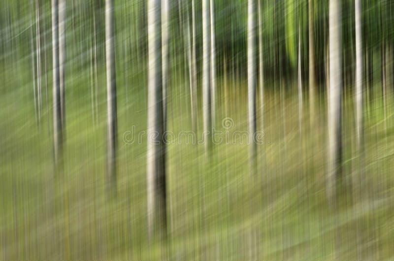 Falta de definición de movimiento, tronco de árboles y licencia abstractos, backgrou del verde amarillo imagenes de archivo