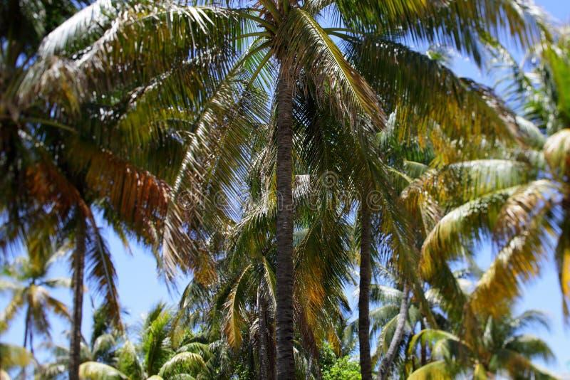 Falta de definición del cambio de la inclinación de las palmeras imágenes de archivo libres de regalías