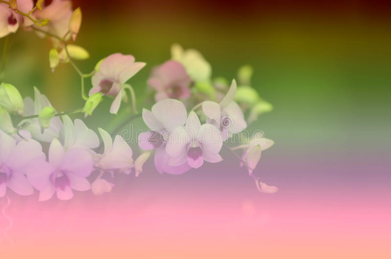 Falta de definición hermosa del fondo del vintage de los estampados de flores para la pendiente fotografía de archivo libre de regalías