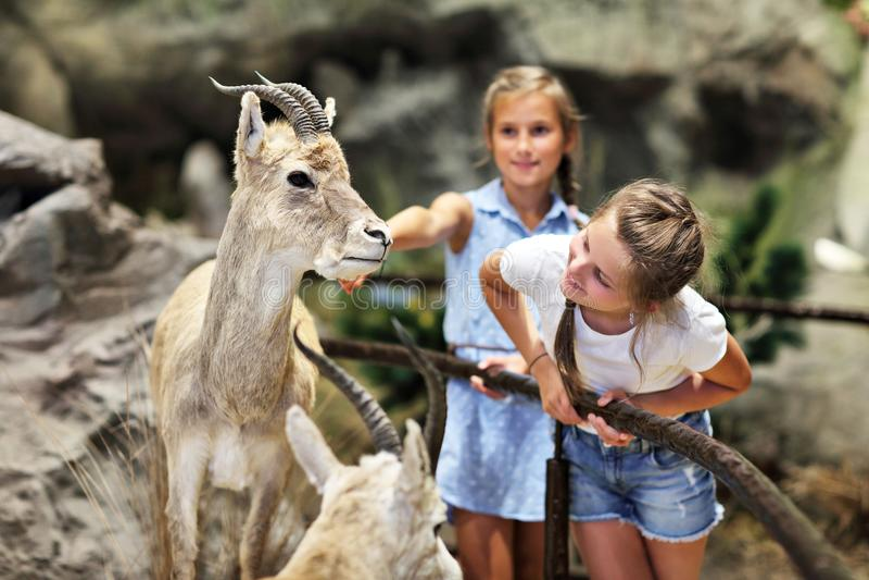 Família alegre no museu da natureza foto de stock royalty free