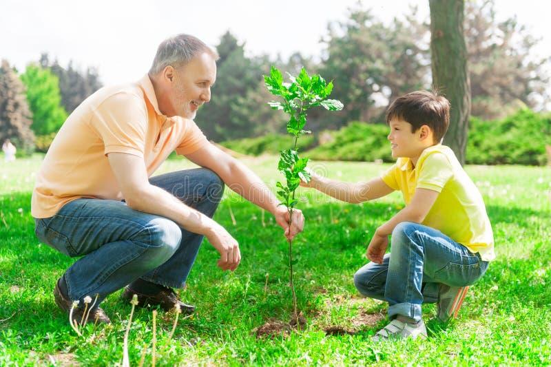 A família amigável alegre está plantando o broto imagens de stock