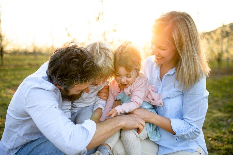 Família com duas crianças pequenas sentadas ao ar livre em pomar na primavera ao pôr do sol imagens de stock