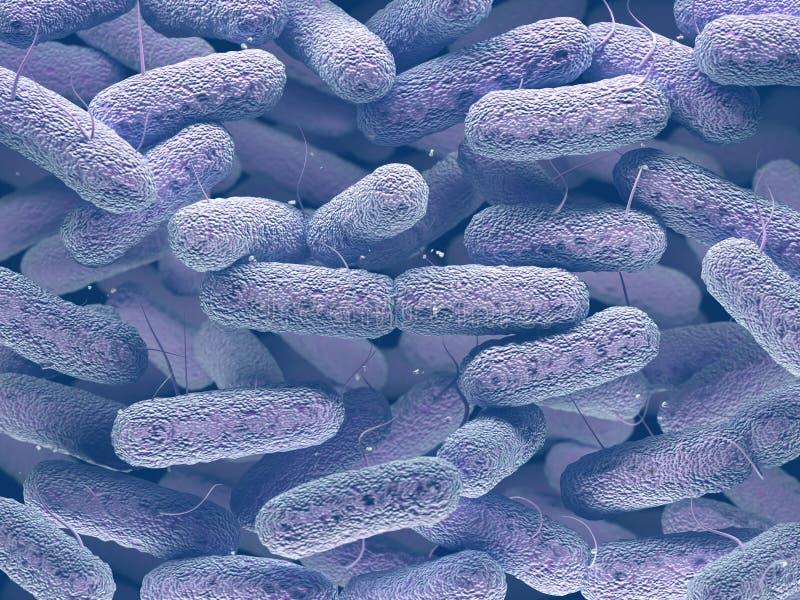 Família de bactérias dos Enterobacteriaceae fotos de stock