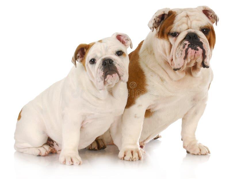 Família de cão fotos de stock royalty free