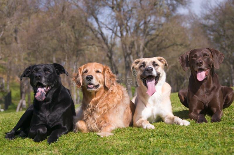 Família de cão da diversidade fotografia de stock royalty free