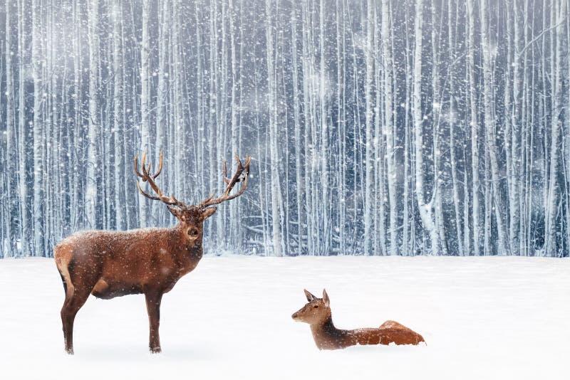 Família de cervos nobres em uma imagem nevado da fantasia do Natal da floresta do inverno na cor azul e branca fotografia de stock royalty free