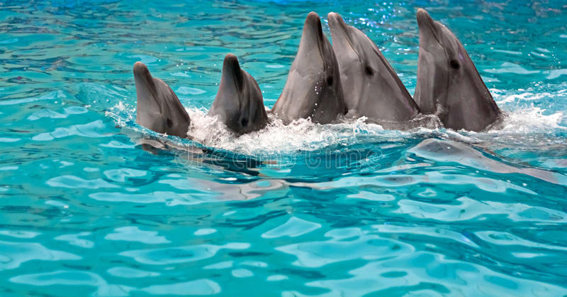 Família de danças dos golfinhos fotos de stock