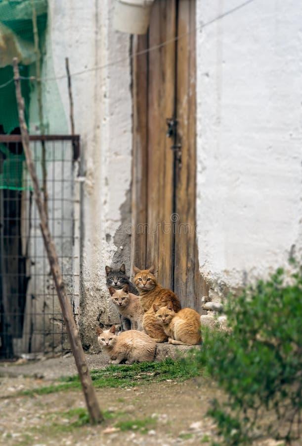 Família de gatos marrom e branca bonito fotografia de stock