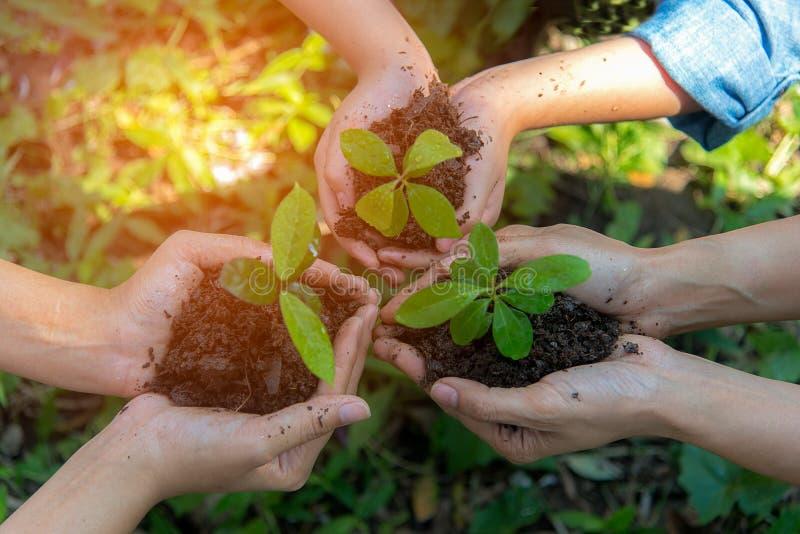 A família de Team Work dos povos das mãos que coloca a planta nova consolida ambiental e reduz a terra do aquecimento global foto de stock