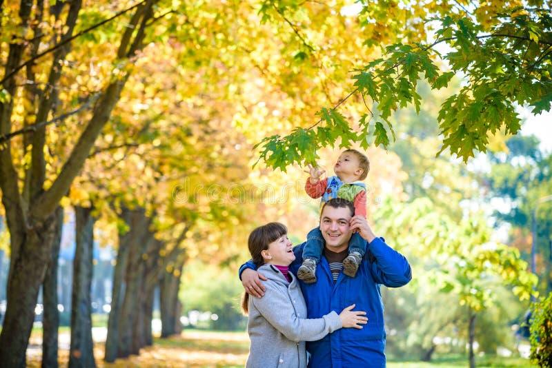 Família de três caminhadas no parque do outono que guarda as mãos filho levando do pai feliz com folhas de bordo A mãe abraça seu imagem de stock