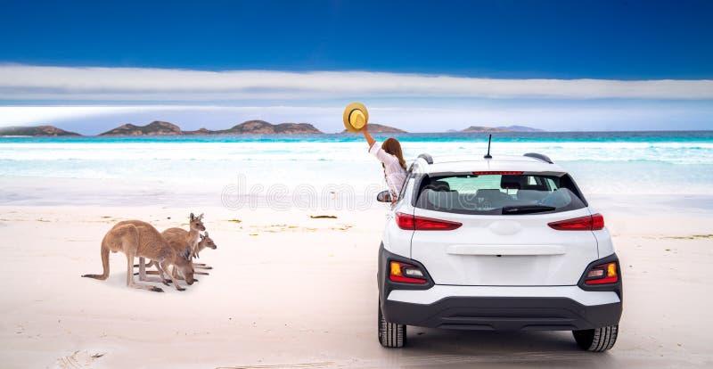 Família do canguru em Lucky Bay imagens de stock royalty free