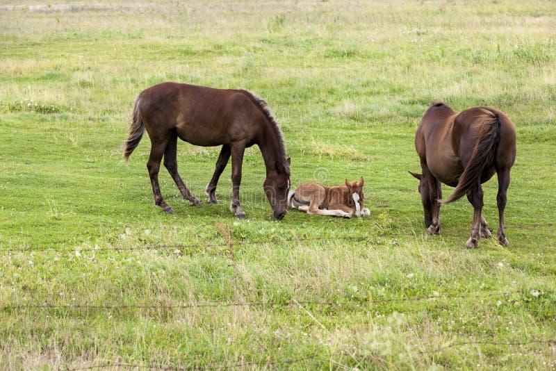 família do cavalo imagens de stock