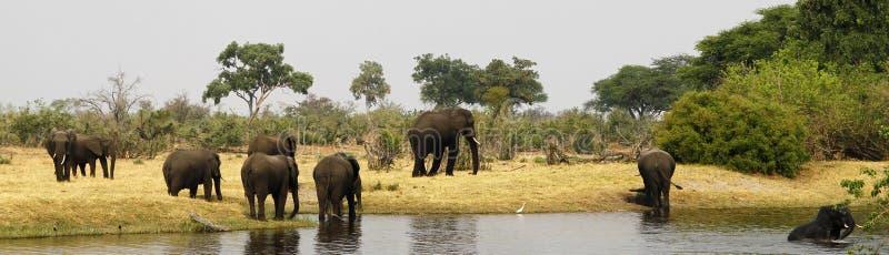 Família do elefante africano fotografia de stock royalty free