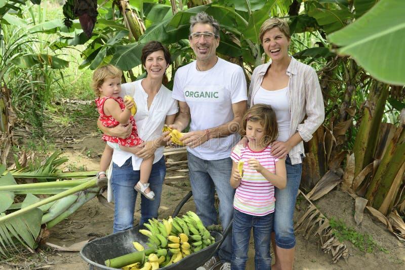 Família do fazendeiro e do cliente na plantação de banana foto de stock royalty free