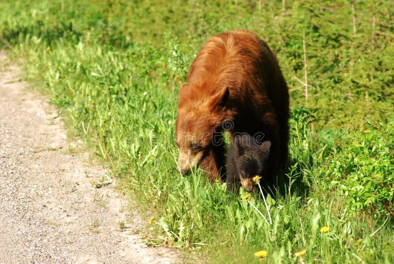 Família do urso imagem de stock