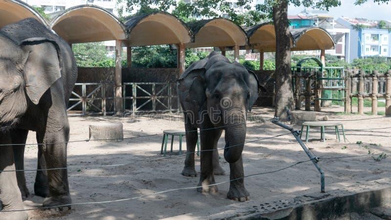 Família dos elefantes em seu habitatn imagem de stock