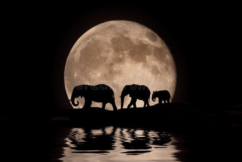 Família dos elefantes na silhueta do luar imagens de stock royalty free