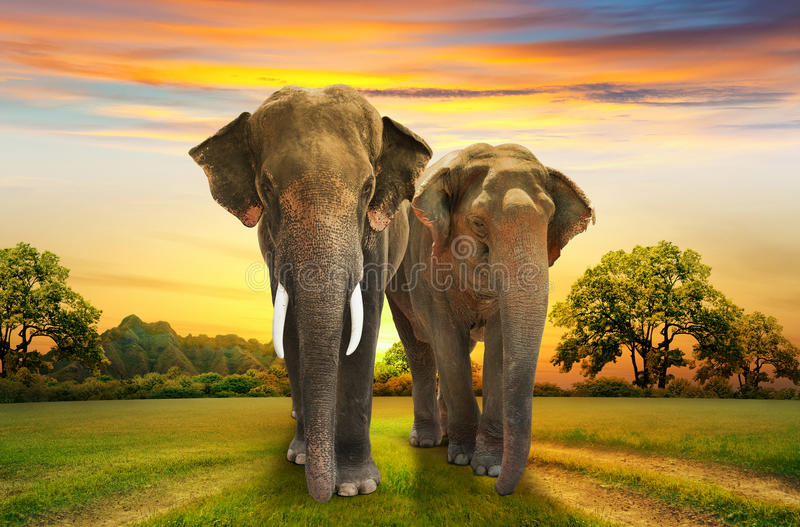 Família dos elefantes no por do sol fotografia de stock