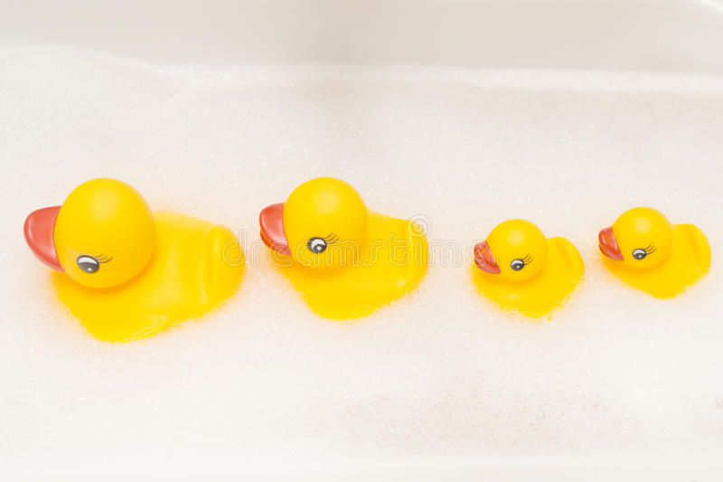 Família dos patos em uma linha fotos de stock royalty free