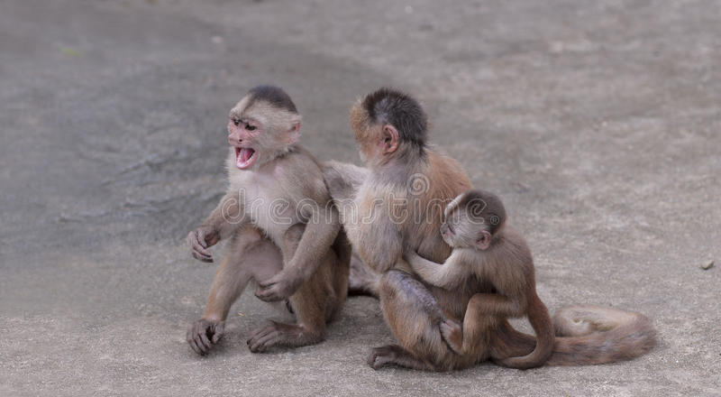 Família feliz (na concepção do macaco) foto de stock