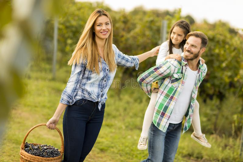 Família feliz no vinhedo fotografia de stock