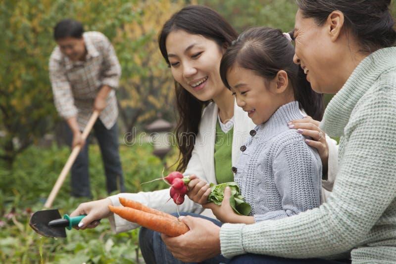 Família feliz que colhe vegetais no jardim, olhando para baixo foto de stock