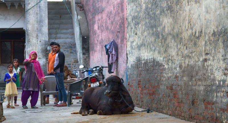 Família indiana e vaca tradicional perto da casa no centro da capital indiana foto de stock