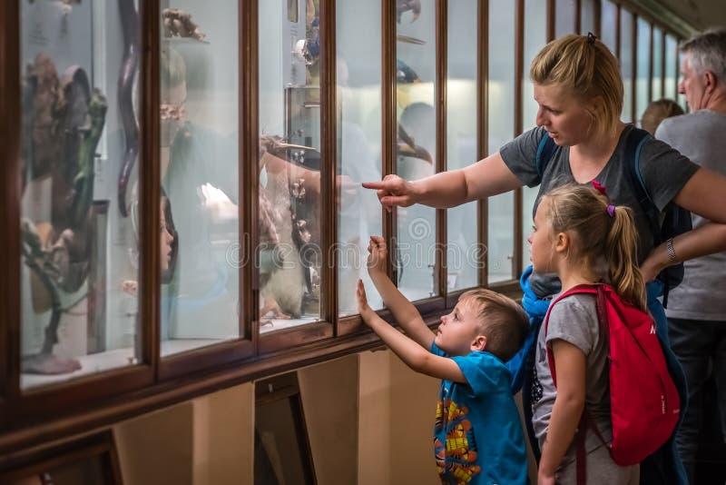 Família no museu de Horniman em Londres fotos de stock royalty free