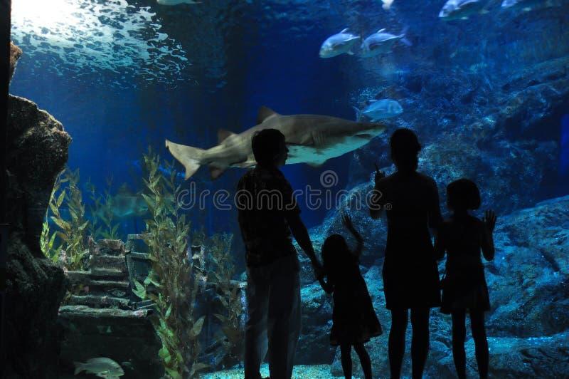 Família no oceanarium imagem de stock royalty free