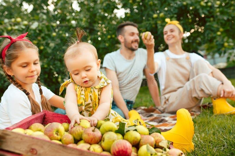 A família nova feliz durante maçãs da colheita em um jardim fora fotos de stock royalty free