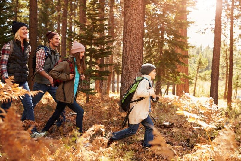 Família que caminha através de uma floresta, Big Bear, Califórnia, EUA imagem de stock