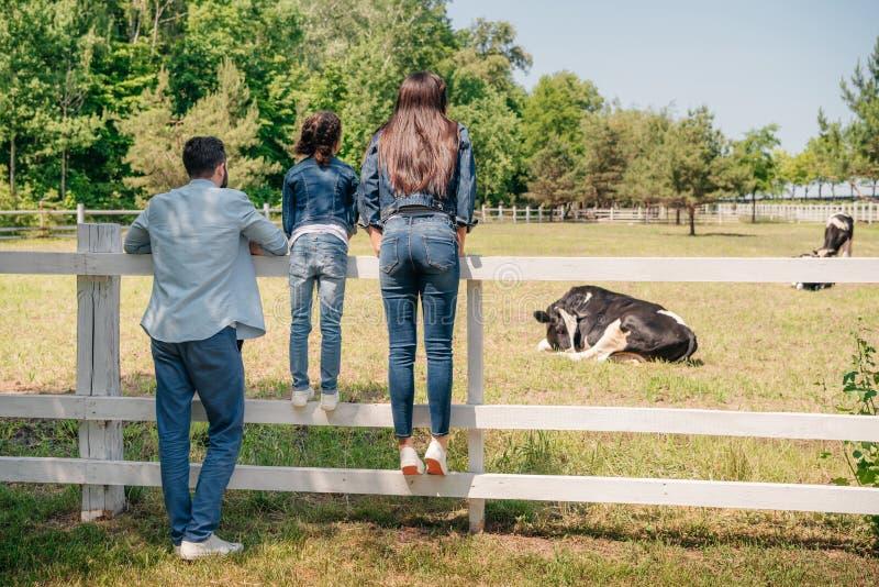 Família que está na cerca de madeira e que olha vacas no pasto fotografia de stock
