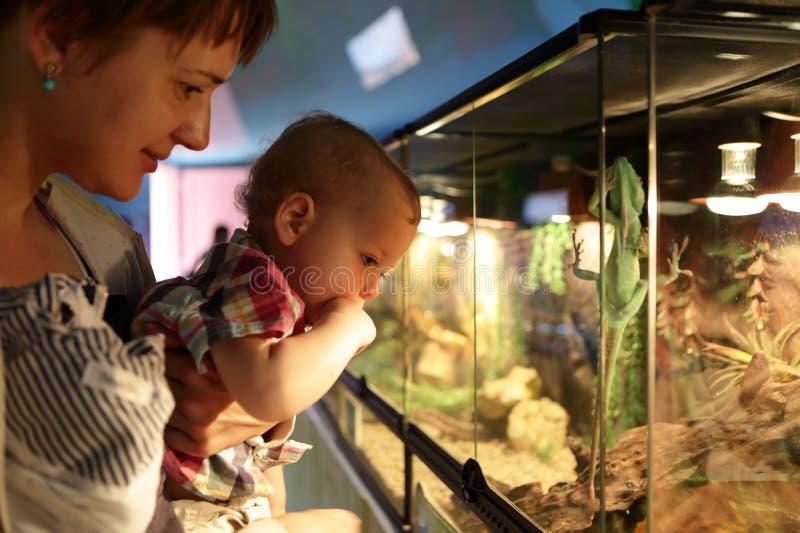 Família que olha o lagarto imagens de stock royalty free