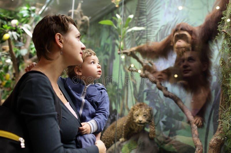 Família que olha o macaco fotografia de stock royalty free