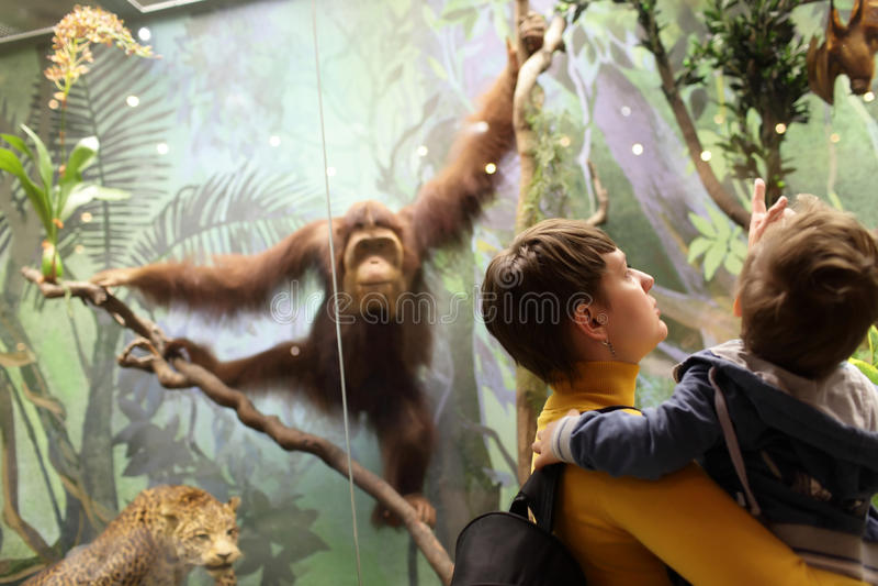Família que olha o macaco foto de stock