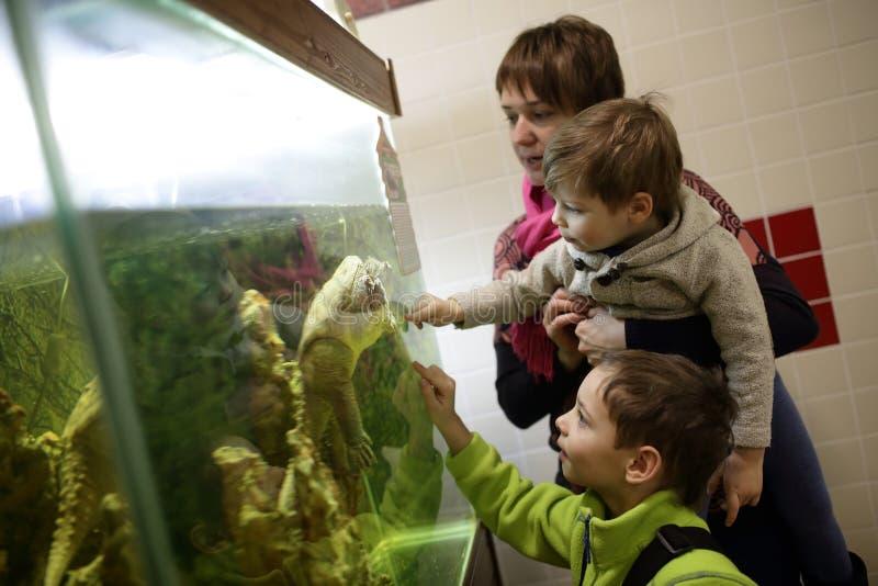 Família que olha a tartaruga do caimão imagem de stock