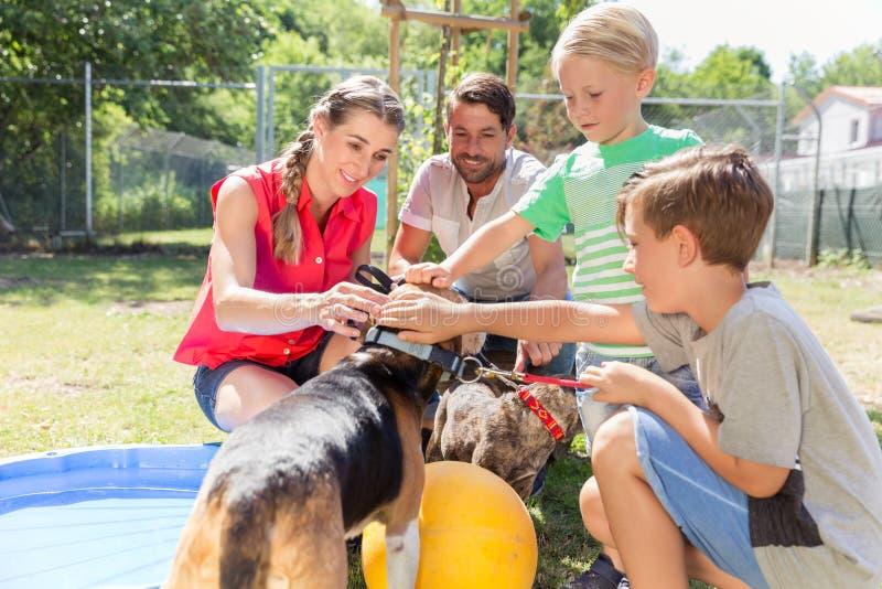 Família que toma em casa um cão do abrigo animal que dá a casa nova fotografia de stock royalty free