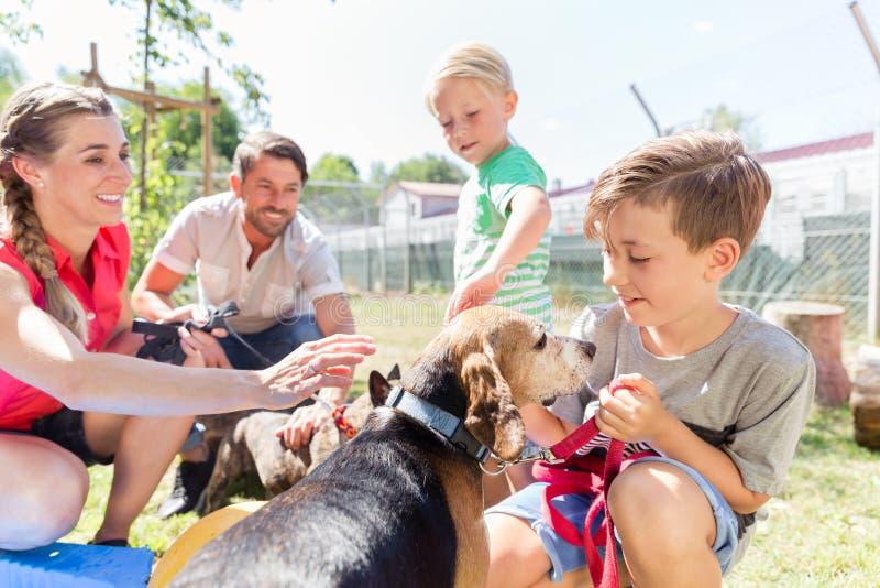 Família que toma em casa um cão do abrigo animal imagem de stock royalty free