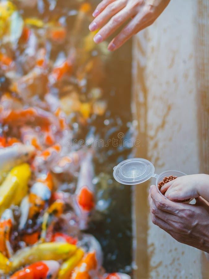 A fam?lia da felicidade est? ajudando-se a alimentar muito a carpa de Koi da fantasia na lagoa do jardim japon?s imagem de stock royalty free