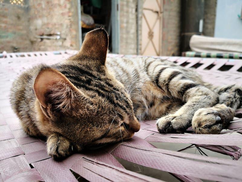 Fam?lia de gato na casa tipos diferentes de gatos que vivem aqui fotos de stock royalty free