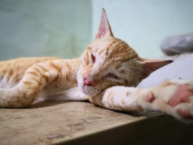 Fam?lia de gato na casa tipos diferentes de gatos que vivem aqui fotografia de stock royalty free