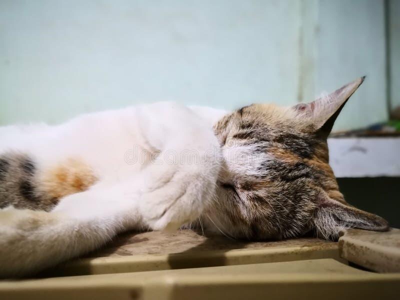 Fam?lia de gato na casa tipos diferentes de gatos que vivem aqui foto de stock royalty free