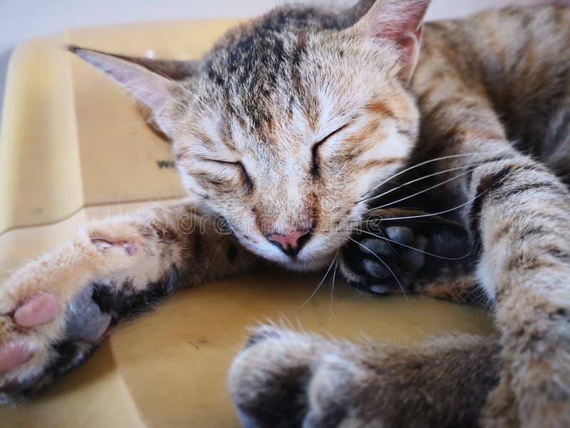 Fam?lia de gato na casa tipos diferentes de gatos que vivem aqui imagens de stock royalty free